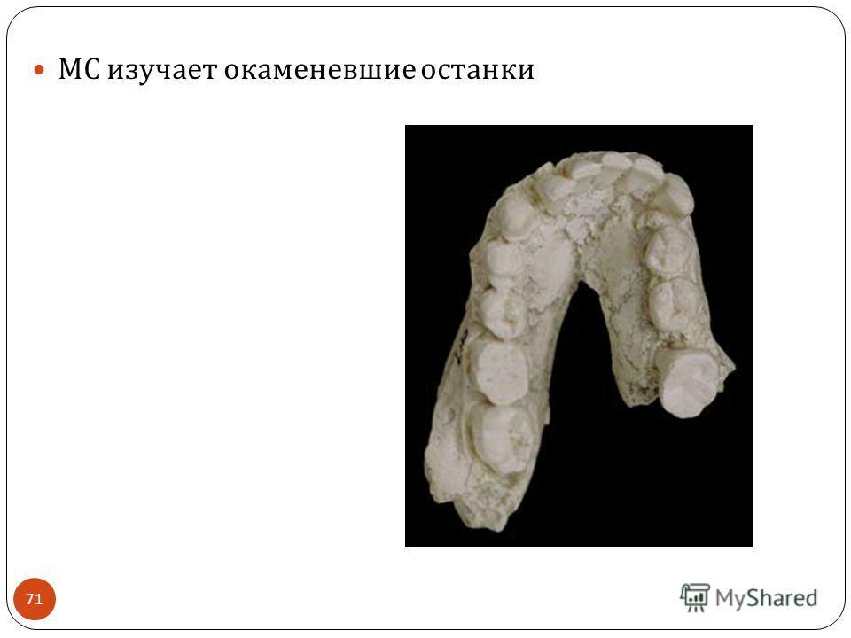 МС изучает окаменевшие останки 71