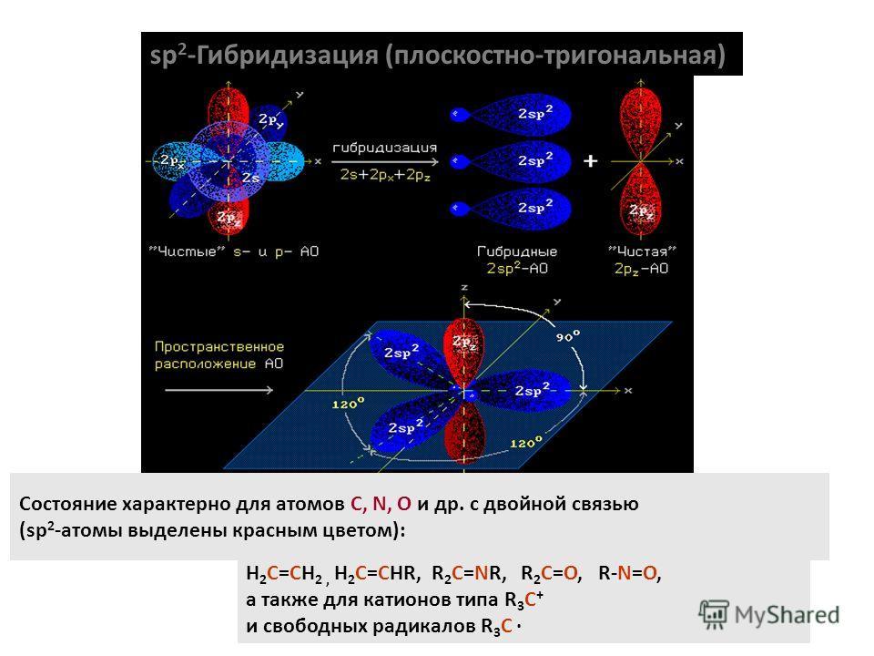 sp 2 -Гибридизация (плоскостно-тригональная) Состояние характерно для атомов С, N, O и др. с двойной связью (sp 2 -атомы выделены красным цветом): H 2 C=CH 2, H 2 C=CHR, R 2 C=NR, R 2 C=O, R-N=O, а также для катионов типа R 3 C + и свободных радикало