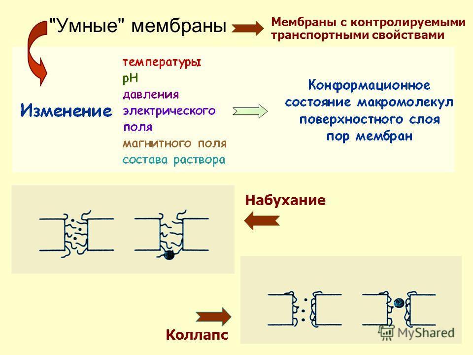 34 Умные мембраны Набухание Коллапс Мембраны с контролируемыми транспортными свойствами