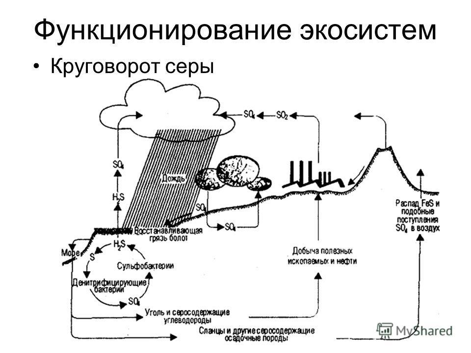 Функционирование экосистем Круговорот серы