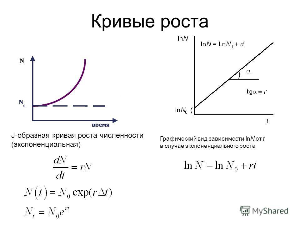 Кривые роста J-образная кривая роста численности (экспоненциальная) Графический вид зависимости lnN от t в случае экспоненциального роста