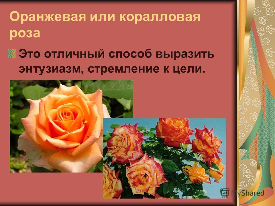 Оранжевая или коралловая роза Это отличный способ выразить энтузиазм, стремление к цели.