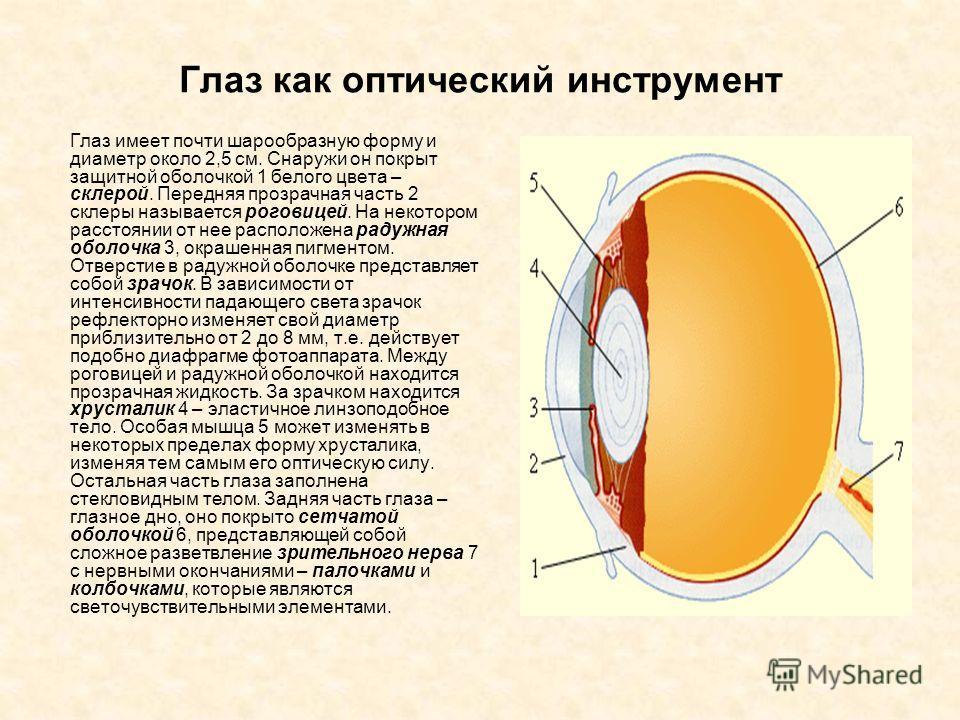 Глаз как оптический инструмент Глаз имеет почти шарообразную форму и диаметр около 2,5 см. Снаружи он покрыт защитной оболочкой 1 белого цвета – склерой. Передняя прозрачная часть 2 склеры называется роговицей. На некотором расстоянии от нее располож