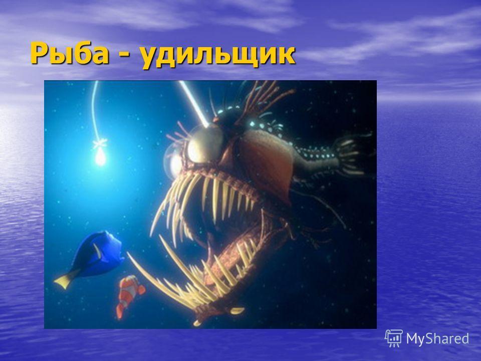 Рыба - удильщик