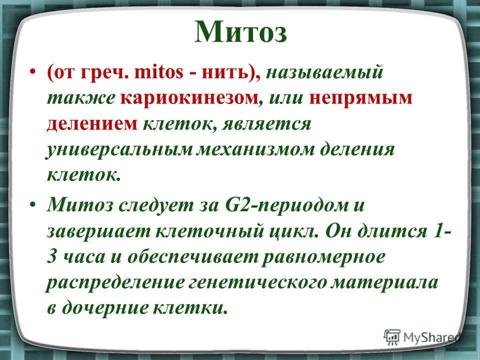 Митоз (от греч. mitos - нить), называемый также кариокинезом, или непрямым делением клеток, является универсальным механизмом деления клеток. Митоз следует за G2-периодом и завершает клеточный цикл. Он длится 1- 3 часа и обеспечивает равномерное расп