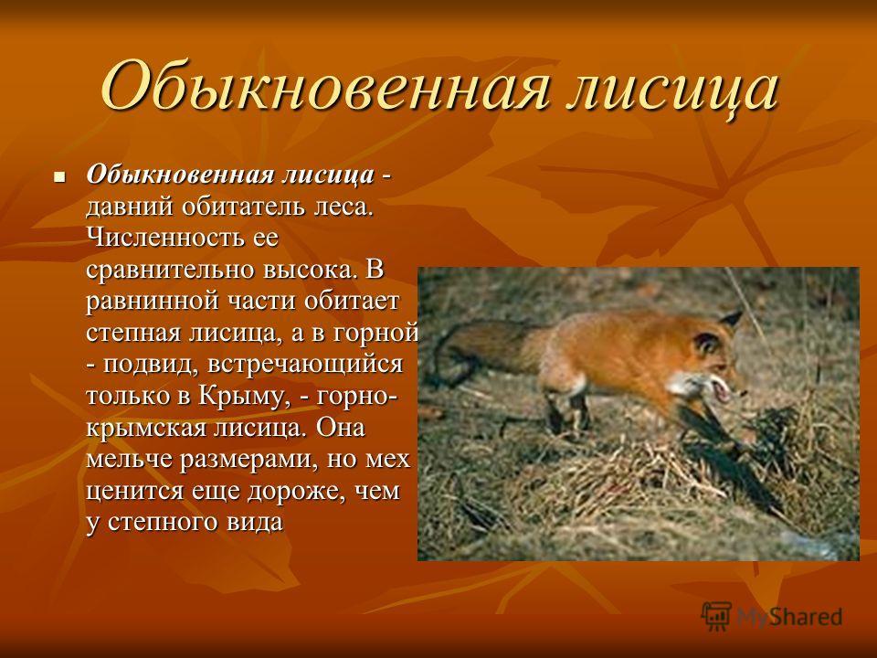 Обыкновенная лисица Обыкновенная лисица - давний обитатель леса. Численность ее сравнительно высока. В равнинной части обитает степная лисица, а в горной - подвид, встречающийся только в Крыму, - горно- крымская лисица. Она мельче размерами, но мех ц