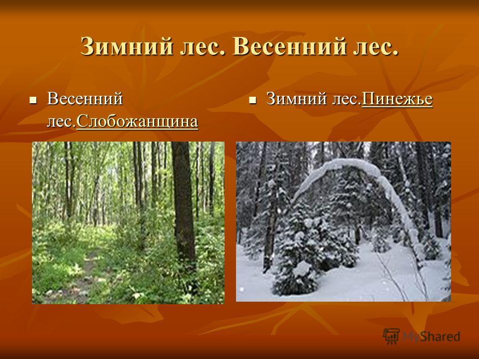 Зимний лес. Весенний лес. Весенний лес.Слобожанщина Весенний лес.СлобожанщинаСлобожанщина Зимний лес.Пинежье Зимний лес.ПинежьеПинежье