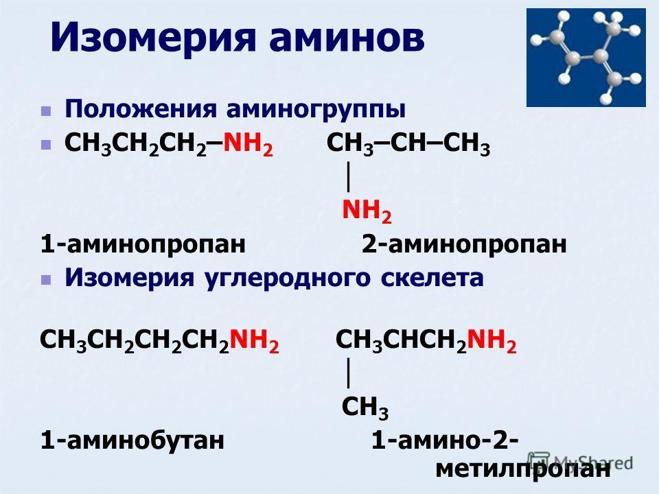 Изомерия аминов Положения аминогруппы CH 3 CH 2 CH 2 –NH 2 CH 3 –CH–CH 3 NH 2 1-аминопропан 2-аминопропан Изомерия углеродного скелета CH 3 CH 2 CH 2 CH 2 NH 2 CH 3 CHCH 2 NH 2 CH 3 1-аминобутан 1-амино-2- метилпропан