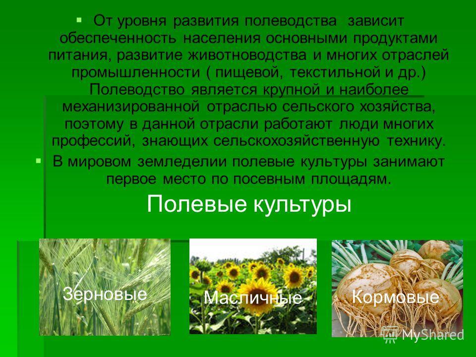 От уровня развития полеводства зависит обеспеченность населения основными продуктами питания, развитие животноводства и многих отраслей промышленности ( пищевой, текстильной и др.) Полеводство является крупной и наиболее механизированной отраслью сел