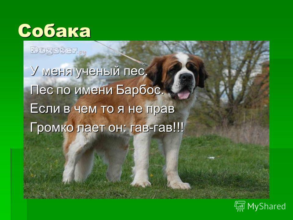 Собака У меня ученый пес. Пес по имени Барбос. Если в чем то я не прав Громко лает он: гав-гав!!!