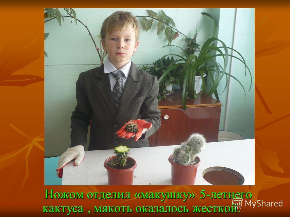 Обезопасил руки от иголок кактусов. Обезопасил руки от иголок кактусов.