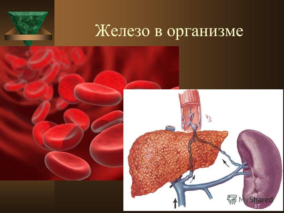 Железо в организме 37