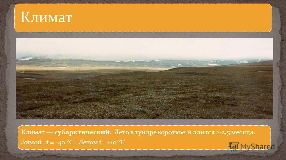 Климат Климат субарктический. Лето в тундре короткое и длится 2-2,5 месяца. Зимой t = -40 °С. Летом t= +10 °С