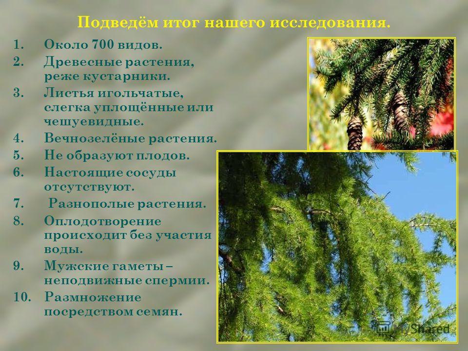 Подведём итог нашего исследования. 1.Около 700 видов. 2.Древесные растения, реже кустарники. 3.Листья игольчатые, слегка уплощённые или чешуевидные. 4.Вечнозелёные растения. 5.Не образуют плодов. 6.Настоящие сосуды отсутствуют. 7. Разнополые растения