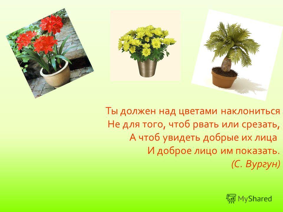 Вывод: В ходе исследований мы поняли, что выращивание комнатных растений может помочь в преобразовании помещений и может спасти мир. Мы проделали интересное исследование, в результате которого пришли к выводу, что наша гипотеза верна, растения благот