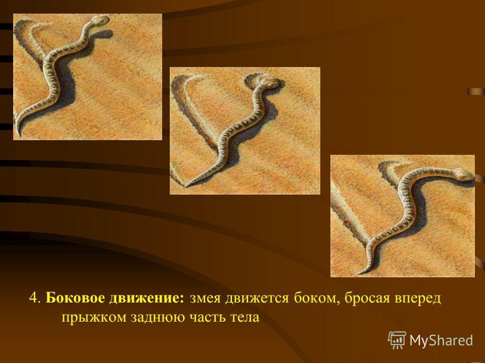 4. Боковое движение: змея движется боком, бросая вперед прыжком заднюю часть тела