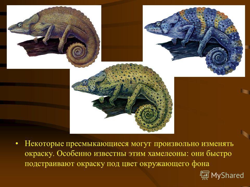 Некоторые пресмыкающиеся могут произвольно изменять окраску. Особенно известны этим хамелеоны: они быстро подстраивают окраску под цвет окружающего фона