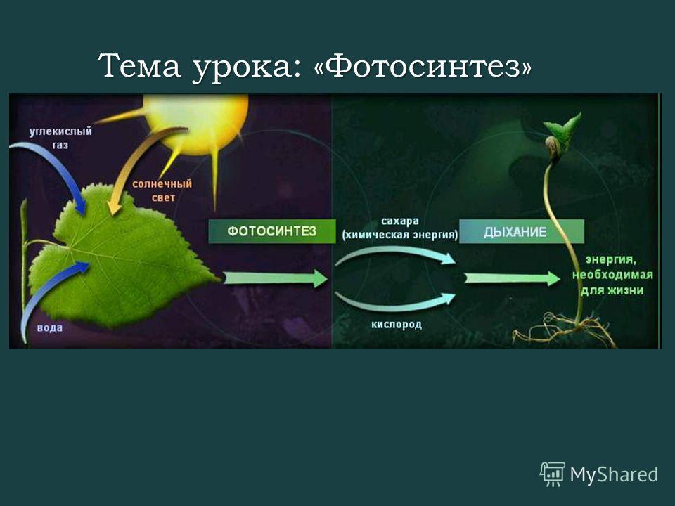 Тема урока: «Фотосинтез»