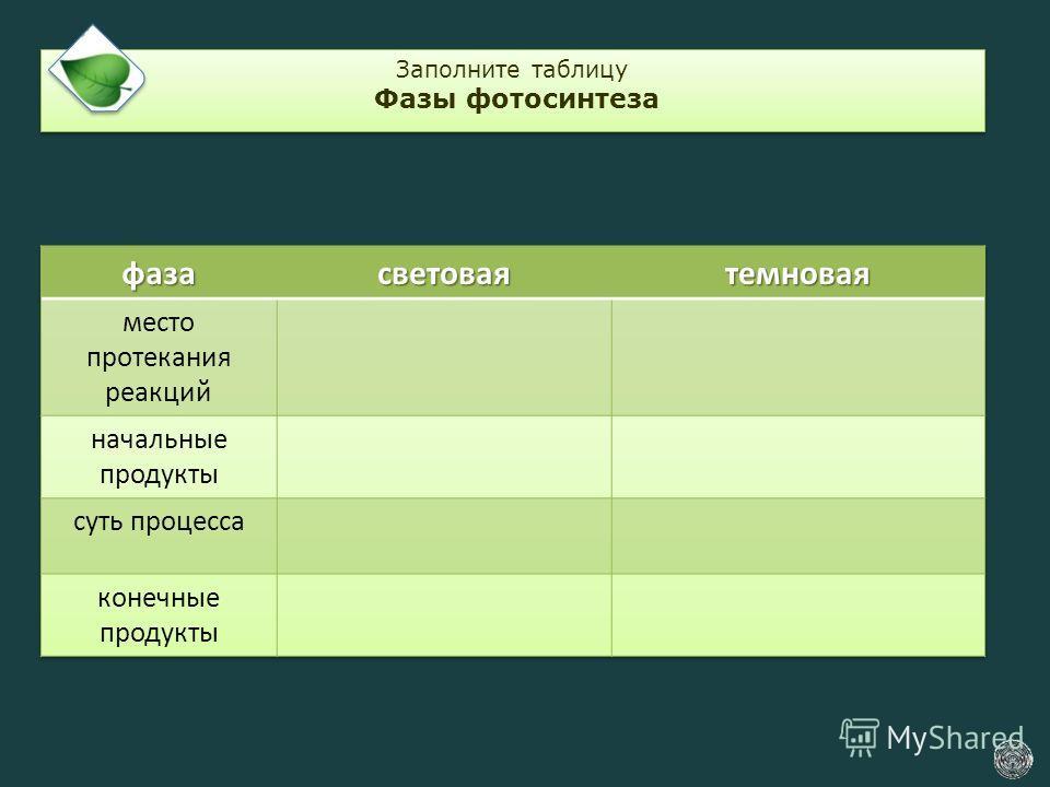 Заполните таблицу Фазы фотосинтеза Заполните таблицу Фазы фотосинтеза