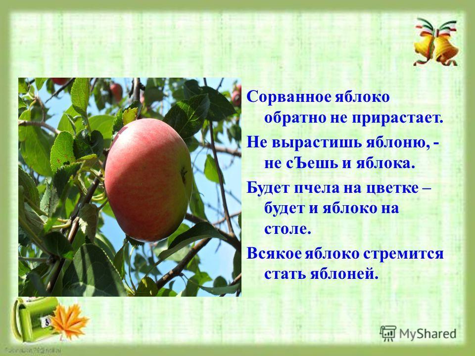 Сорванное яблоко обратно не прирастает. Не вырастишь яблоню, - не сЪешь и яблока. Будет пчела на цветке – будет и яблоко на столе. Всякое яблоко стремится стать яблоней.