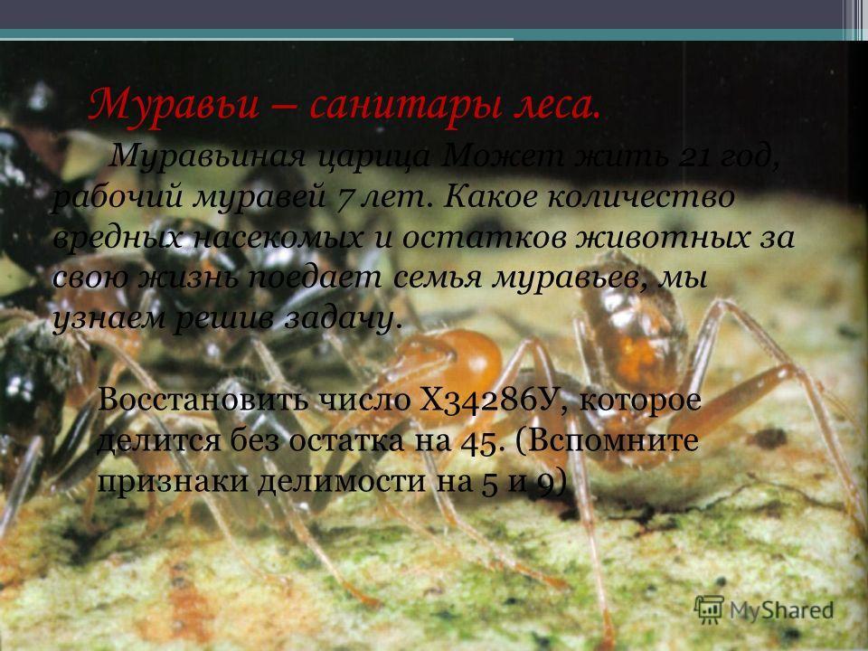 Муравьи – санитары леса. Муравьиная царица Может жить 21 год, рабочий муравей 7 лет. Какое количество вредных насекомых и остатков животных за свою жизнь поедает семья муравьев, мы узнаем решив задачу. Восстановить число Х34286У, которое делится без