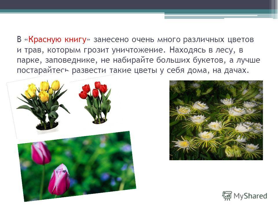 В «Красную книгу» занесено очень много различных цветов и трав, которым грозит уничтожение. Находясь в лесу, в парке, заповеднике, не набирайте больших букетов, а лучше постарайтесь развести такие цветы у себя дома, на дачах.