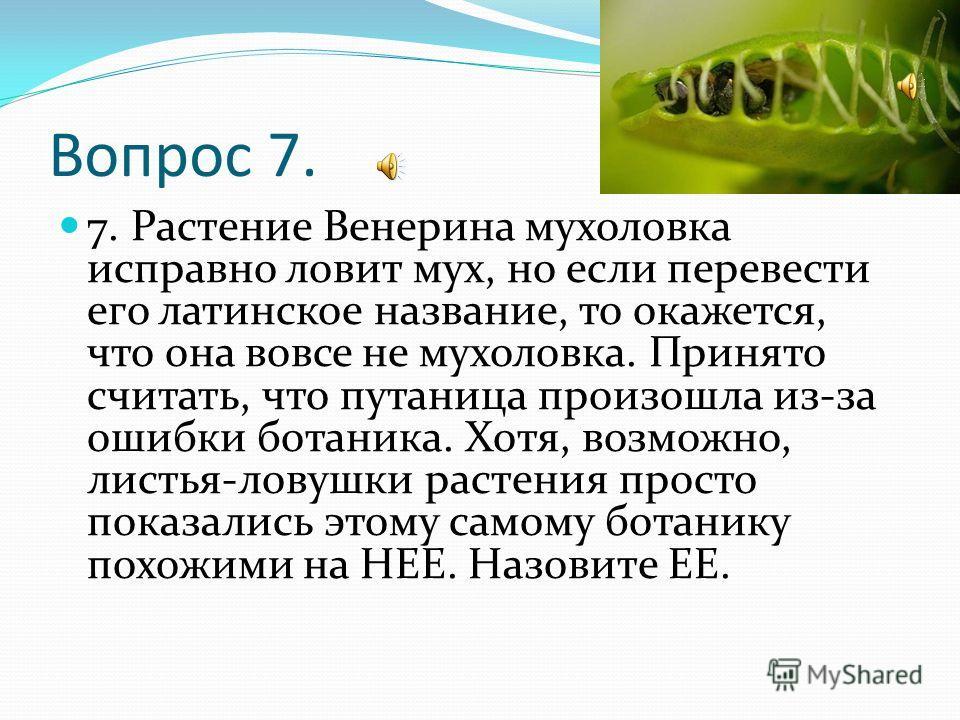 Вопрос 7. 7. Растение Венерина мухоловка исправно ловит мух, но если перевести его латинское название, то окажется, что она вовсе не мухоловка. Принято считать, что путаница произошла из-за ошибки ботаника. Хотя, возможно, листья-ловушки растения про