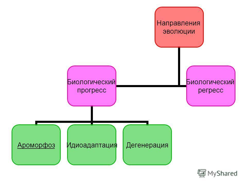 Направления эволюции Биологический прогресс АроморфозИдиоадаптацияДегенерация Биологический регресс