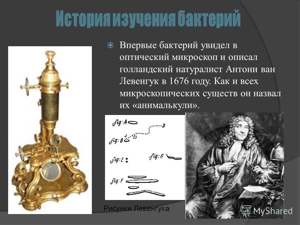Впервые бактерий увидел в оптический микроскоп и описал голландский натуралист Антони ван Левенгук в 1676 году. Как и всех микроскопических существ он назвал их «анималькули». Рисунки Левенгука