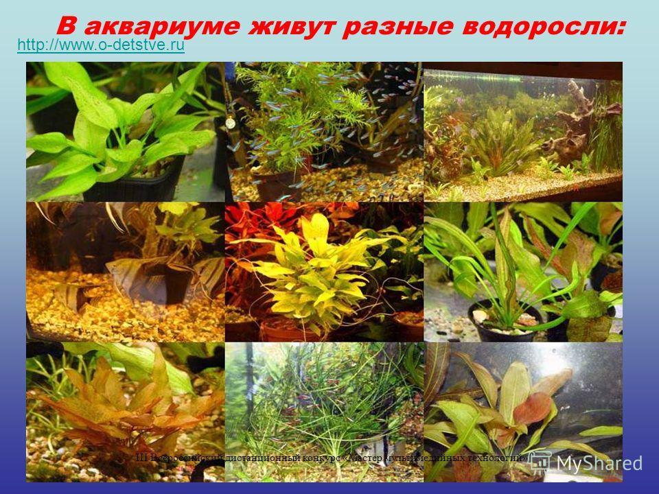 В аквариуме живут разные водоросли: http://www.o-detstve.ru III Всероссийский дистанционный конкурс «Мастер мультимедийных технологий»