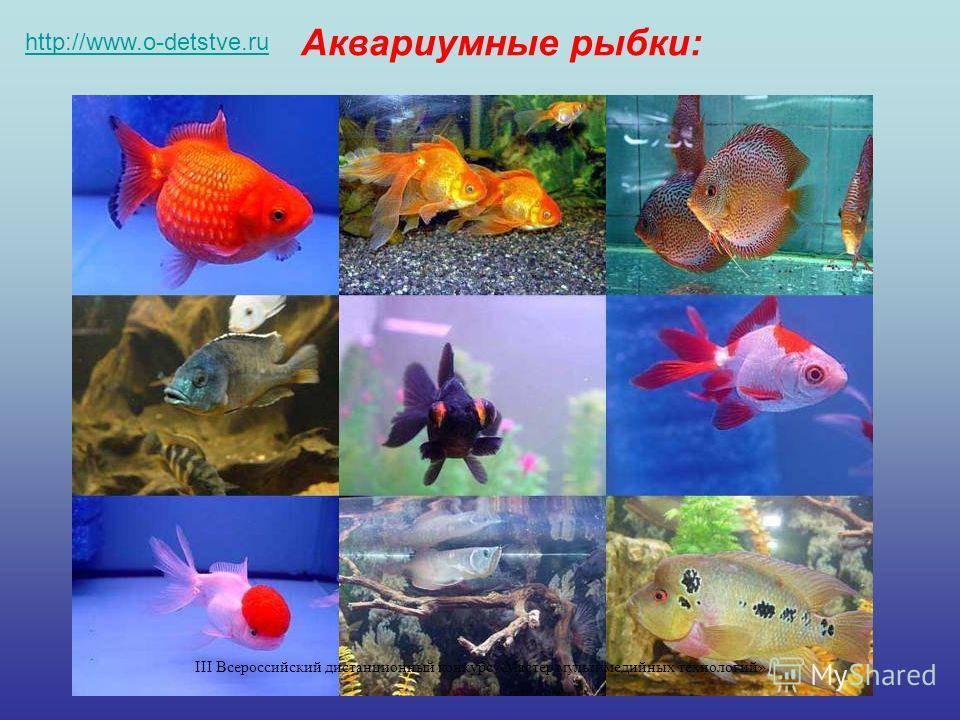 Аквариумные рыбки: http://www.o-detstve.ru III Всероссийский дистанционный конкурс «Мастер мультимедийных технологий»