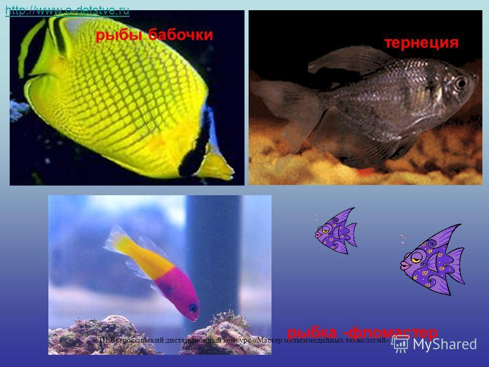 рыбы бабочки тернеция рыбка -фломастер http://www.o-detstve.ru III Всероссийский дистанционный конкурс «Мастер мультимедийных технологий»