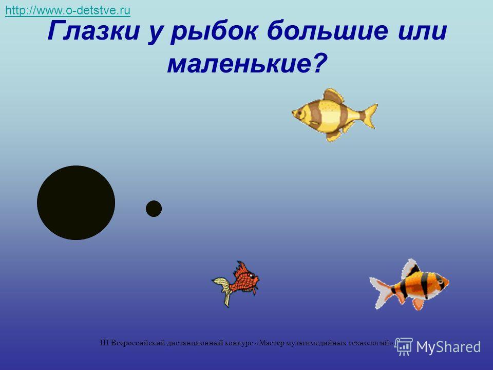 Глазки у рыбок большие или маленькие? http://www.o-detstve.ru III Всероссийский дистанционный конкурс «Мастер мультимедийных технологий»