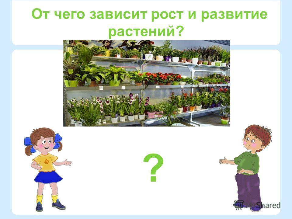 ? От чего зависит рост и развитие растений?