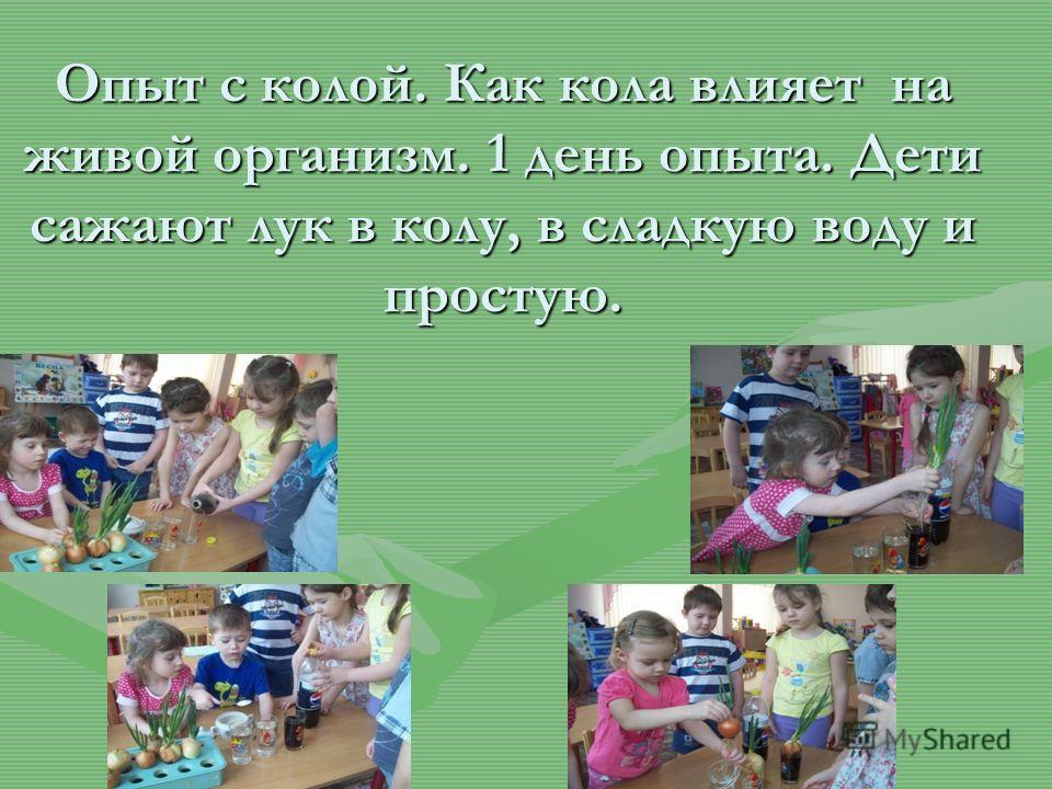 Опыт с колой. Как кола влияет на живой организм. 1 день опыта. Дети сажают лук в колу, в сладкую воду и простую.