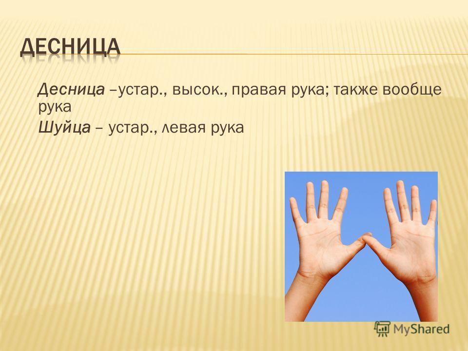 Десница –устар., высок., правая рука; также вообще рука Шуйца – устар., левая рука