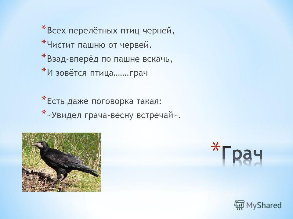 * Всех перелётных птиц черней, * Чистит пашню от червей. * Взад-вперёд по пашне вскачь, * И зовётся птица…….грач * Есть даже поговорка такая: * «Увидел грача-весну встречай».