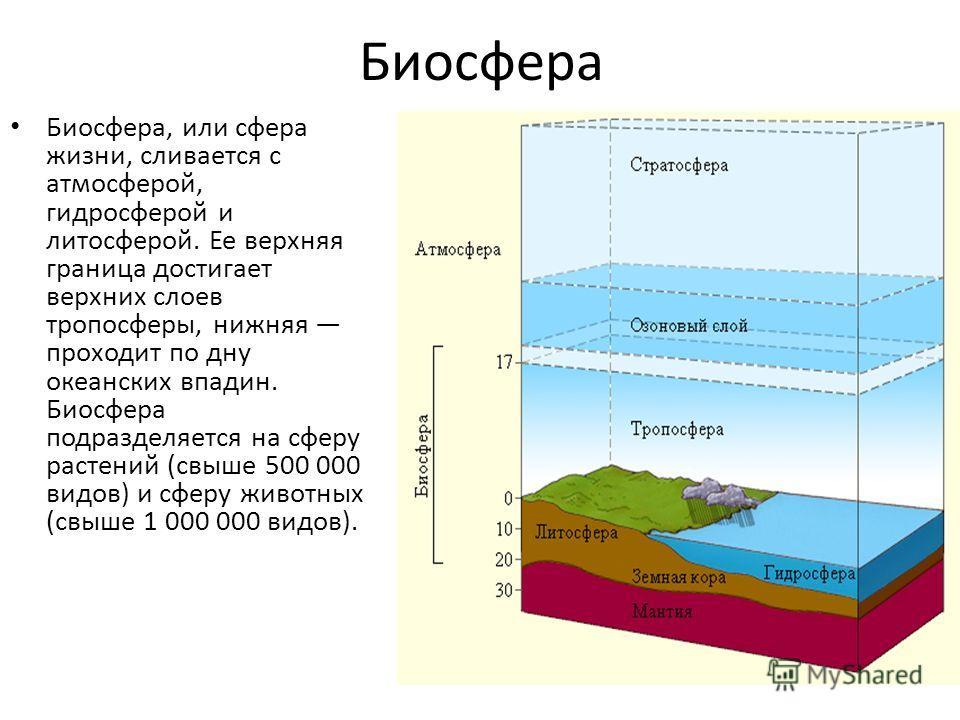Биосфера Биосфера, или сфера жизни, сливается с атмосферой, гидросферой и литосферой. Ее верхняя граница достигает верхних слоев тропосферы, нижняя проходит по дну океанских впадин. Биосфера подразделяется на сферу растений (свыше 500 000 видов) и сф