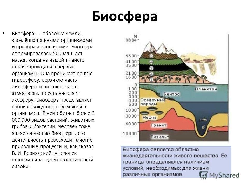 Биосфера Биосфера оболочка Земли, заселённая живыми организмами и преобразованная ими. Биосфера сформировалась 500 млн. лет назад, когда на нашей планете стали зарождаться первые организмы. Она проникает во всю гидросферу, верхнюю часть литосферы и н
