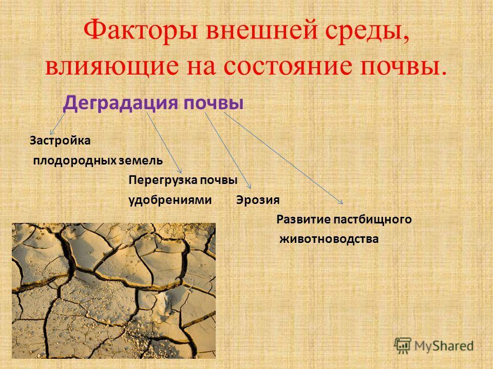 Факторы внешней среды, влияющие на состояние почвы. Деградация почвы Застройка плодородных земель Перегрузка почвы удобрениями Эрозия Развитие пастбищного животноводства