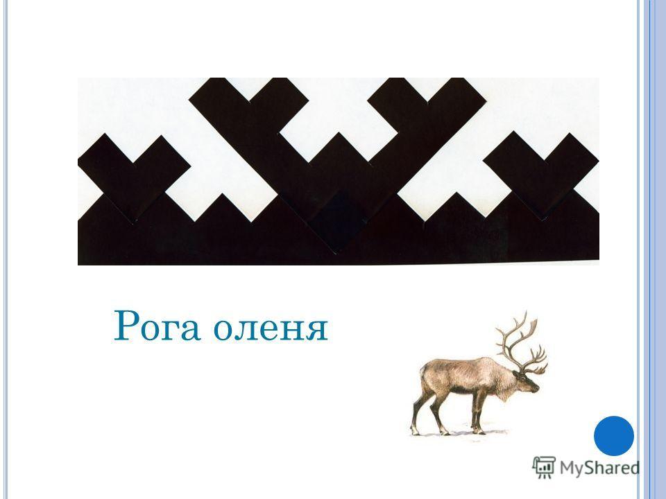 Рога оленя