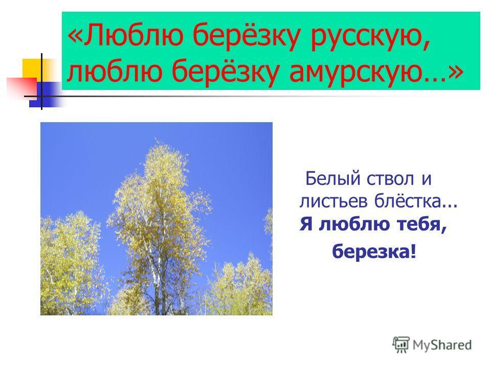 «Люблю берёзку русскую, люблю берёзку амурскую…» Белый ствол и листьев блёстка... Я люблю тебя, березка!