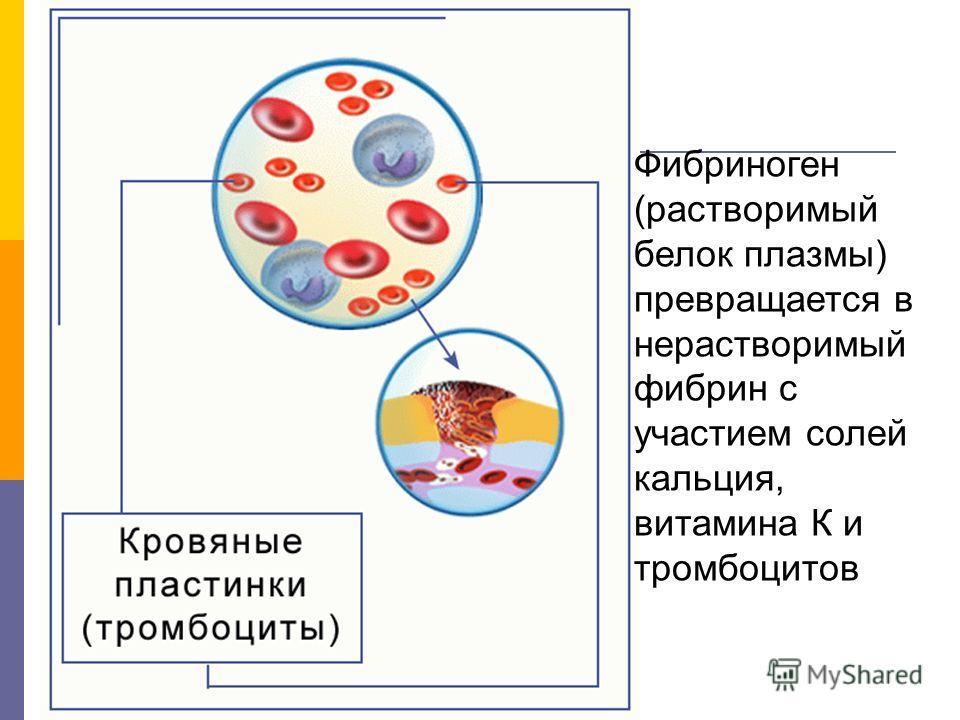Фибриноген (растворимый белок плазмы) превращается в нерастворимый фибрин с участием солей кальция, витамина К и тромбоцитов