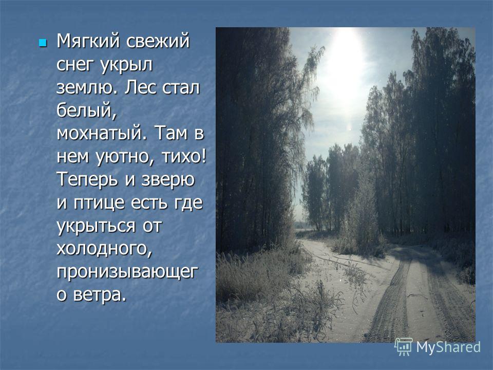 Мягкий свежий снег укрыл землю. Лес стал белый, мохнатый. Там в нем уютно, тихо! Теперь и зверю и птице есть где укрыться от холодного, пронизывающег о ветра.