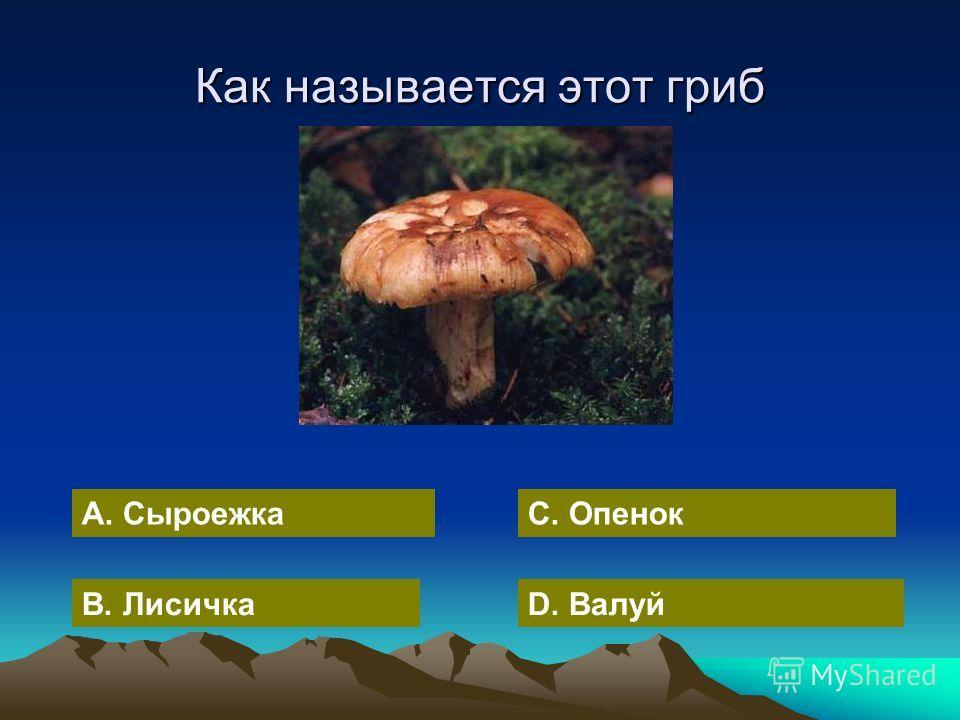 А. Сыроежка В. ЛисичкаD. Валуй С. Опенок Как называется этот гриб