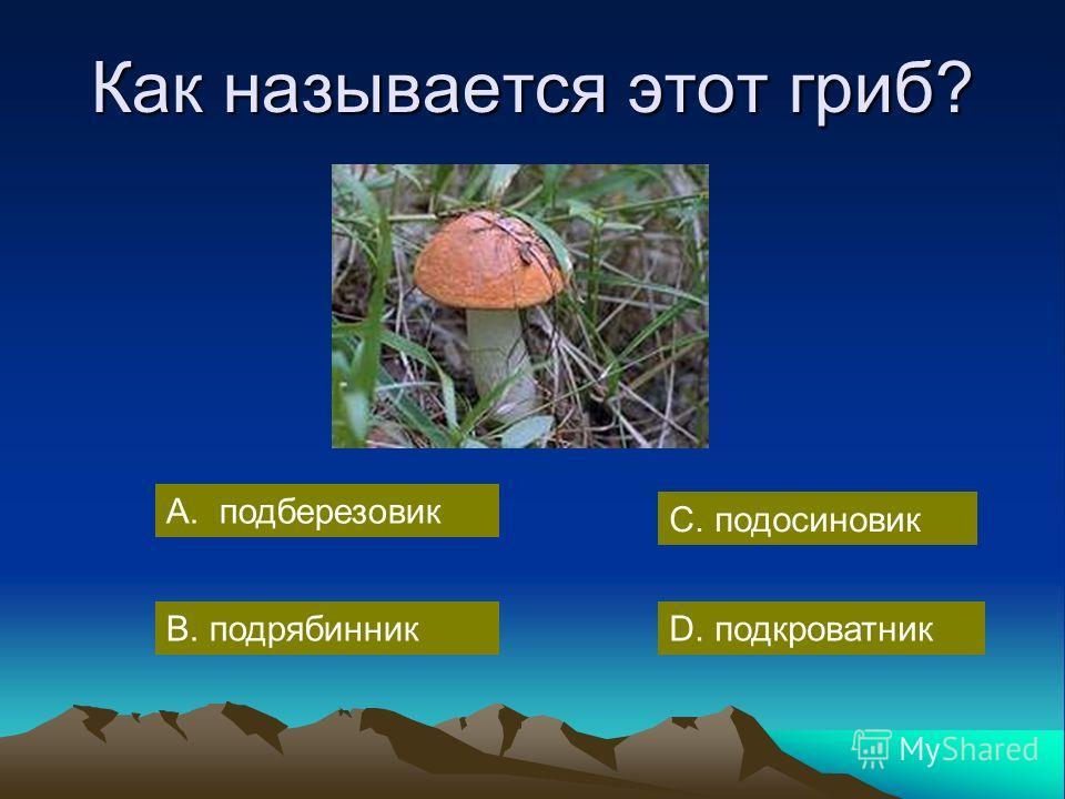 Как называется этот гриб? А. подберезовик С. подосиновик В. подрябинникD. подкроватник