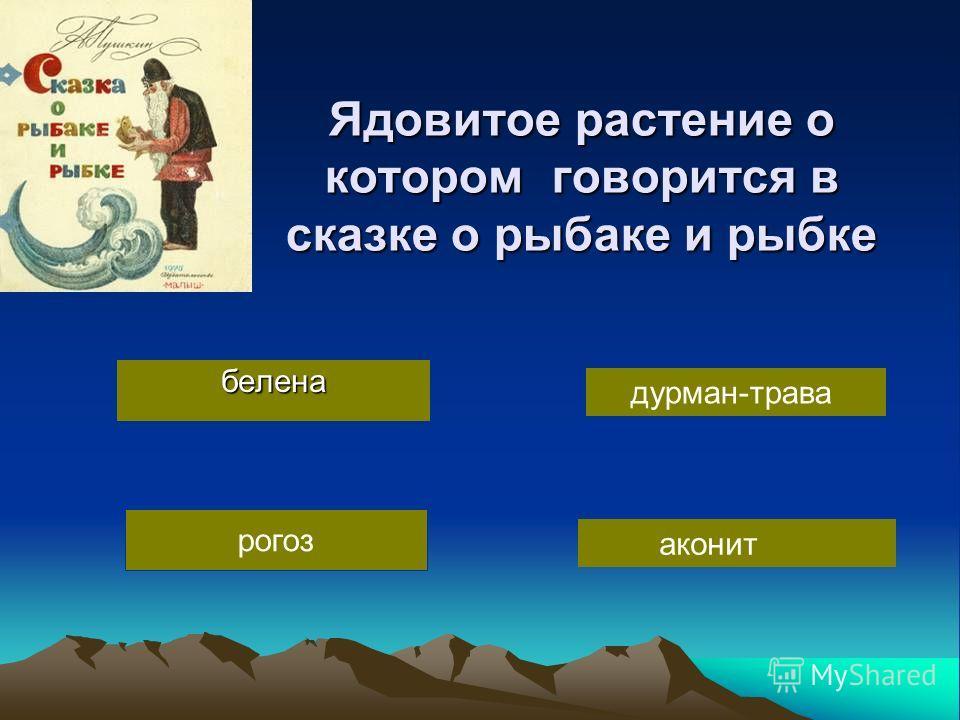 рогоз Ядовитое растение о котором говорится в сказке о рыбаке и рыбке белена дурман-трава аконит