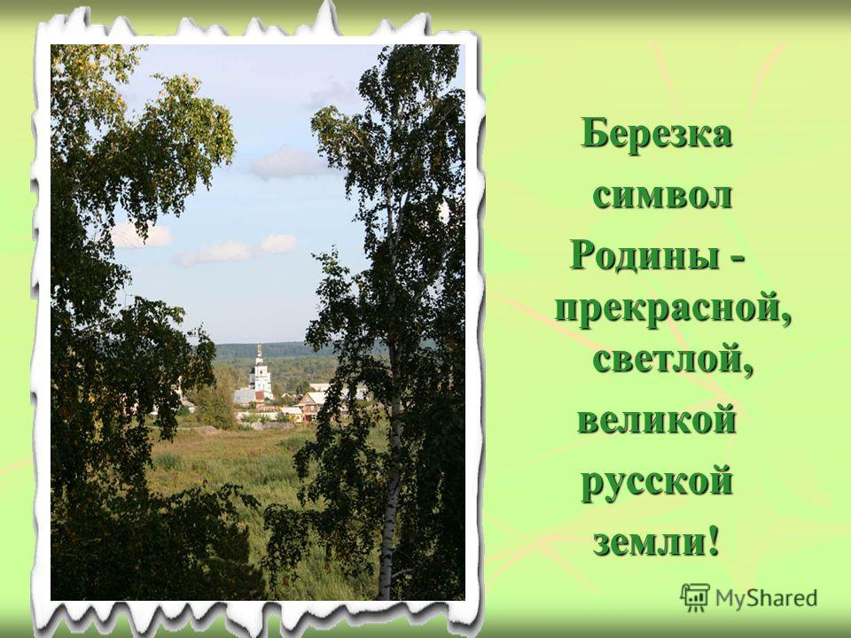 Березка символ символ Родины - прекрасной, светлой, великойрусскойземли!