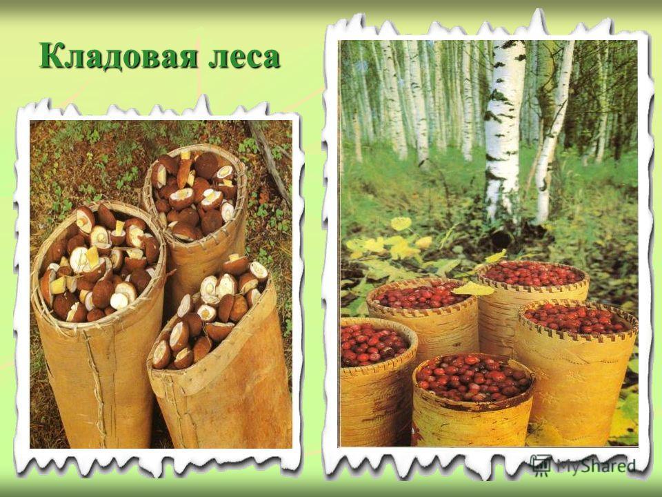 Кладовая леса
