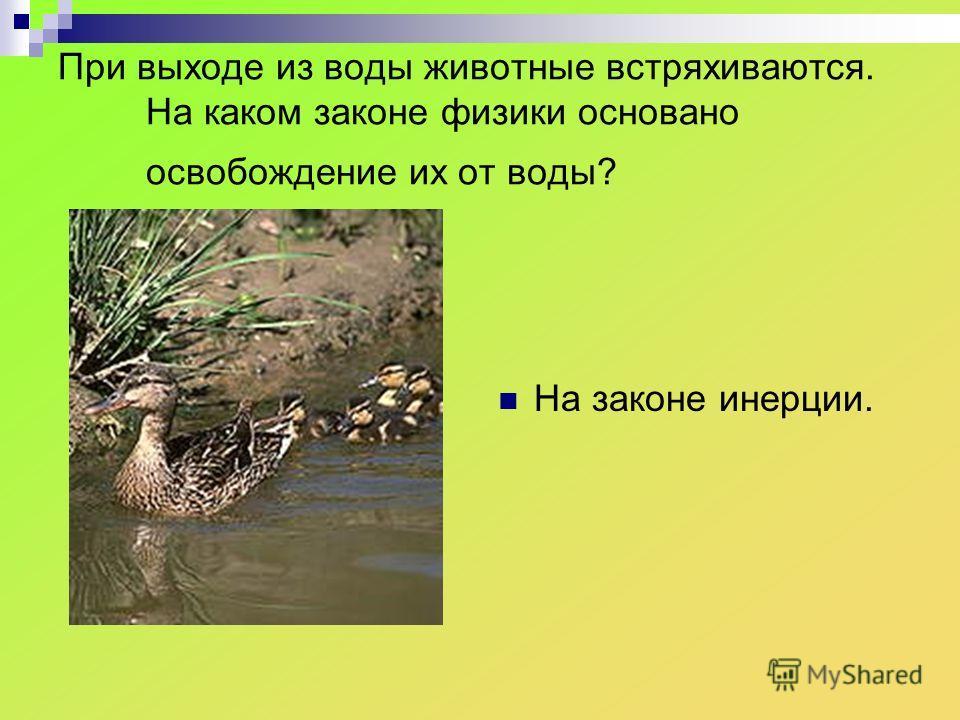 При выходе из воды животные встряхиваются. На каком законе физики основано освобождение их от воды? На законе инерции.